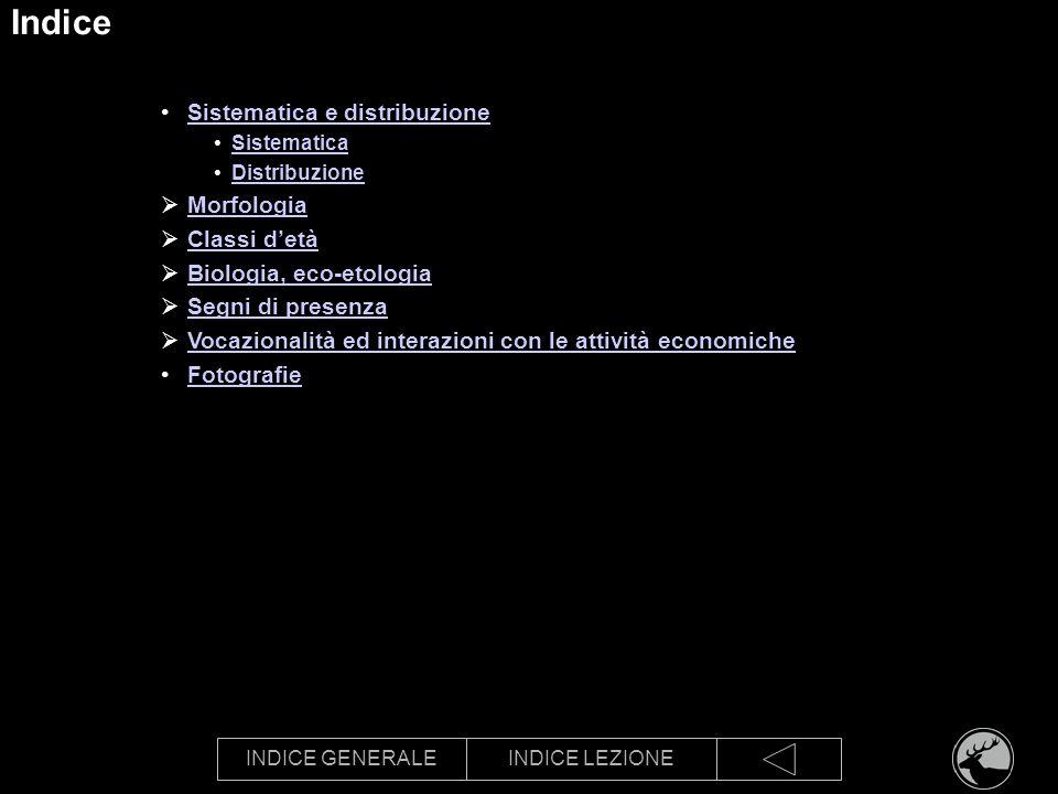 INDICE GENERALEINDICE LEZIONE Indice Sistematica e distribuzione Sistematica Distribuzione Morfologia Classi detà Biologia, eco-etologia Segni di pres