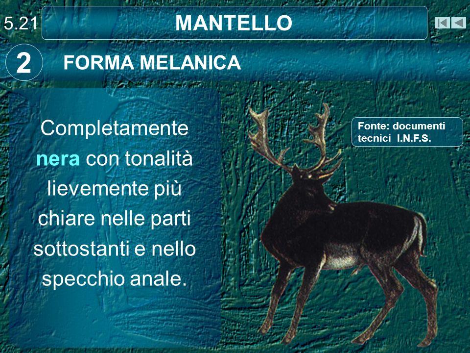 MANTELLO FORMA MELANICA 2 Completamente nera con tonalità lievemente più chiare nelle parti sottostanti e nello specchio anale. 5.21 Fonte: documenti