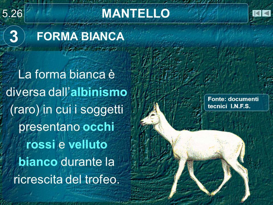 MANTELLO FORMA BIANCA 3 La forma bianca è diversa dallalbinismo (raro) in cui i soggetti presentano occhi rossi e velluto bianco durante la ricrescita