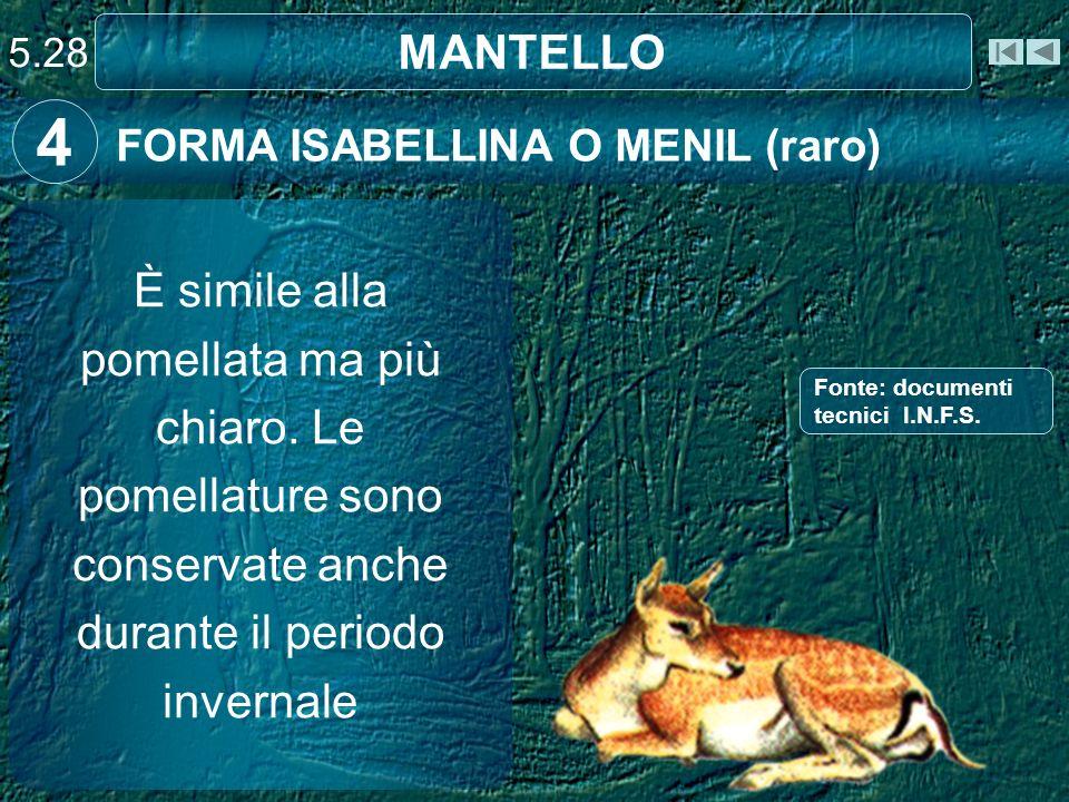 MANTELLO FORMA ISABELLINA O MENIL (raro) 4 È simile alla pomellata ma più chiaro. Le pomellature sono conservate anche durante il periodo invernale 5.
