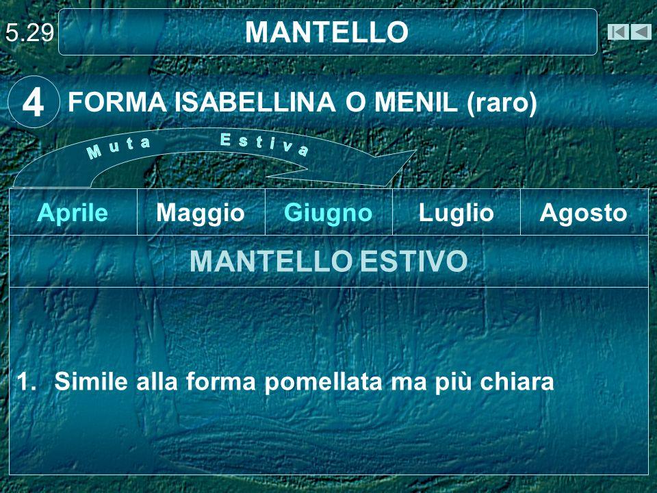 5.29 MANTELLO 1.Simile alla forma pomellata ma più chiara MANTELLO ESTIVO AgostoLuglioGiugnoMaggioAprile FORMA ISABELLINA O MENIL (raro) 4