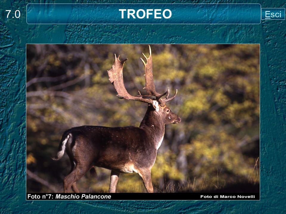 7.0 TROFEO Esci