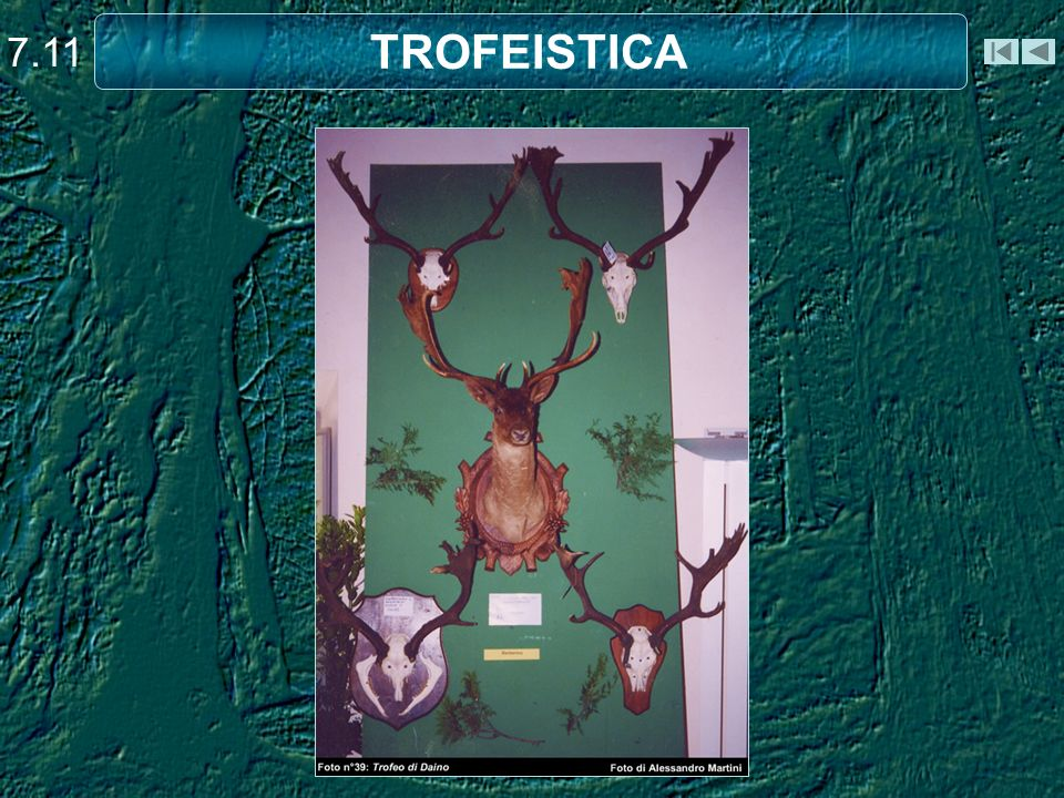 TROFEISTICA 7.11