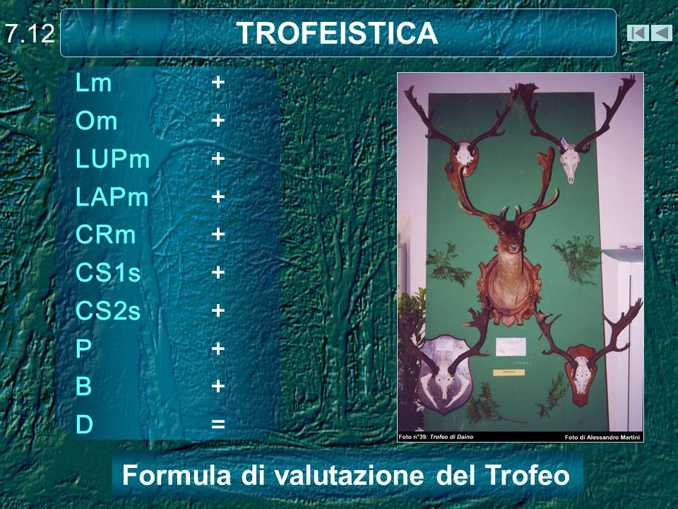 TROFEISTICA 7.12 Lm+ Om+ LUPm+ LAPm+ CRm+ CS1s+ CS2s+ P+ B+ D= Formula di valutazione del Trofeo