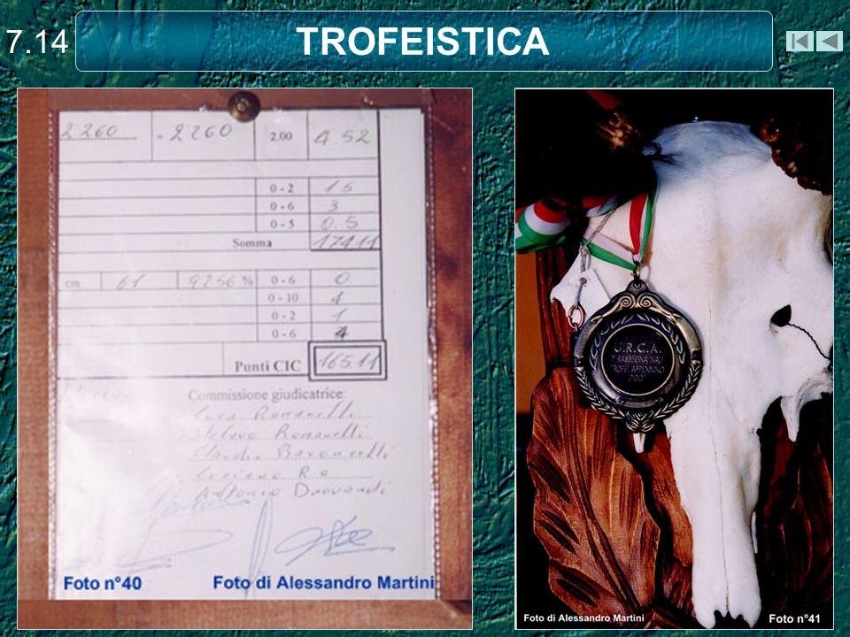TROFEISTICA 7.14