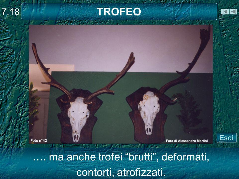 TROFEO …. ma anche trofei brutti, deformati, contorti, atrofizzati. 7.18 Esci
