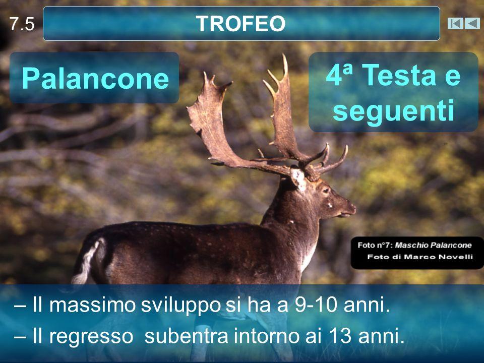 7.5 TROFEO Palancone – Il massimo sviluppo si ha a 9-10 anni. – Il regresso subentra intorno ai 13 anni. 4ª Testa e seguenti