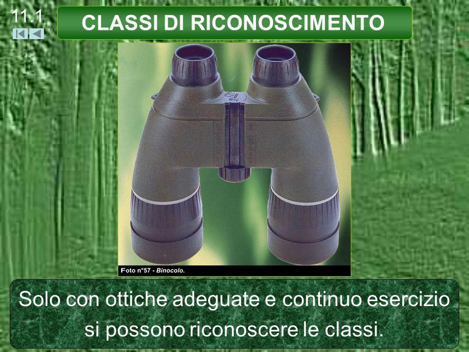 CLASSI DI RICONOSCIMENTO PICCOLO MASCHIO (età inferiore ai 12 mesi) Corporatura Dimensioni inferiore ad un adulto.