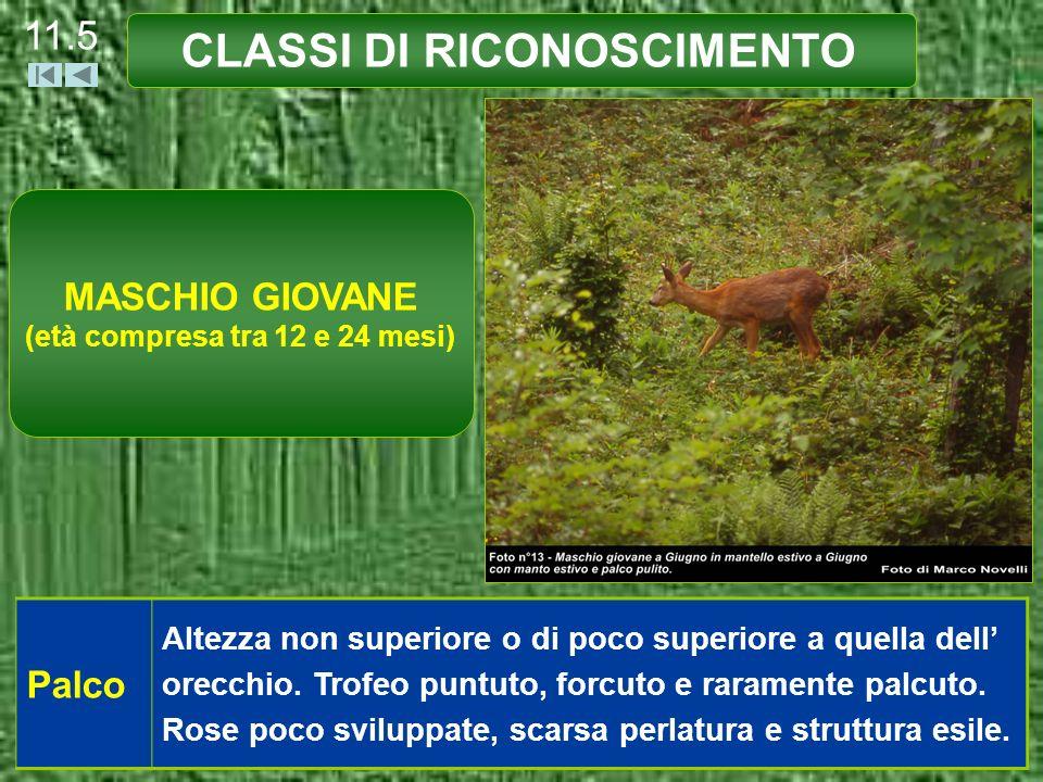 CLASSI DI RICONOSCIMENTO 11.6 Maschera Facciale Scarsa presenza di bianco.