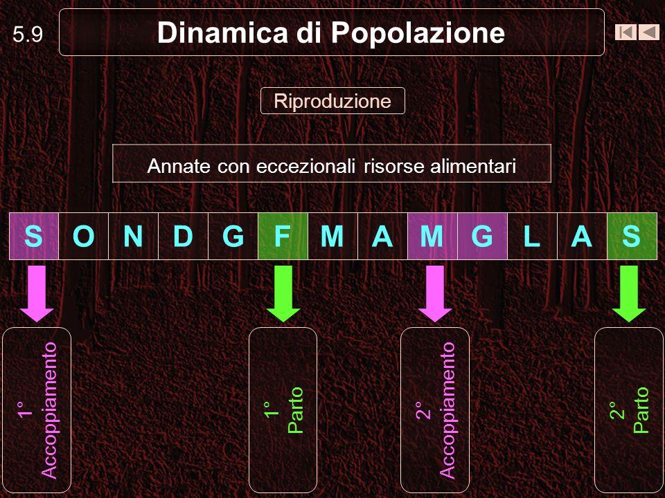 Dinamica di Popolazione Riproduzione 5.9 1° Accoppiamento SALGMAMFGDNOS Annate con eccezionali risorse alimentari 1° Parto 2° Accoppiamento 2° Parto