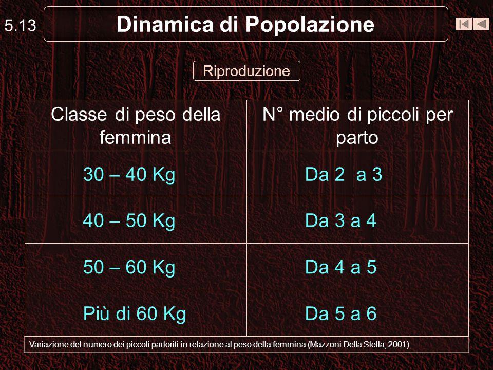 5.13 Dinamica di Popolazione Variazione del numero dei piccoli partoriti in relazione al peso della femmina (Mazzoni Della Stella, 2001) Riproduzione