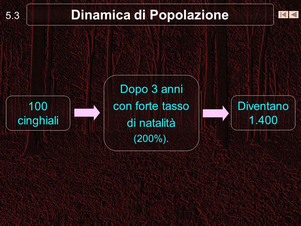 5.3 Dinamica di Popolazione 100 cinghiali Diventano 1.400 Dopo 3 anni con forte tasso di natalità (200%).