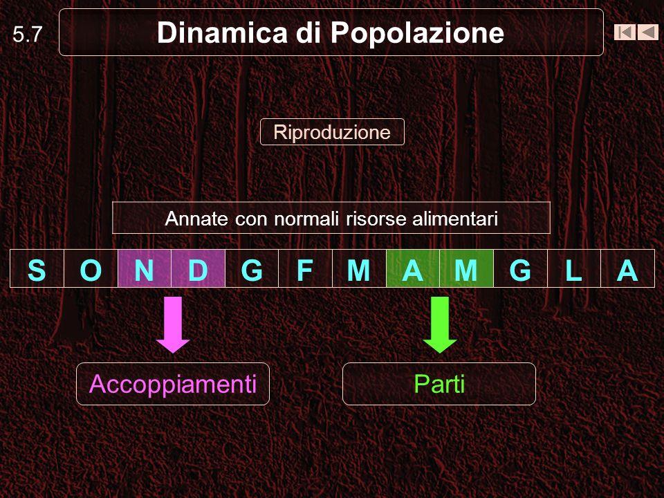 Dinamica di Popolazione ALGMAMFGDNOS 5.7 AccoppiamentiParti Riproduzione Annate con normali risorse alimentari