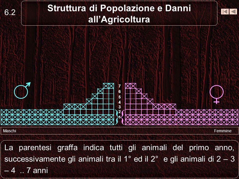 6.3 Struttura di Popolazione e Danni allAgricoltura Si comprende immediatamente come in questa specie il numero dei piccoli è elevatissimo Maschi Femmine { } 1 2 3 4 5 6 7
