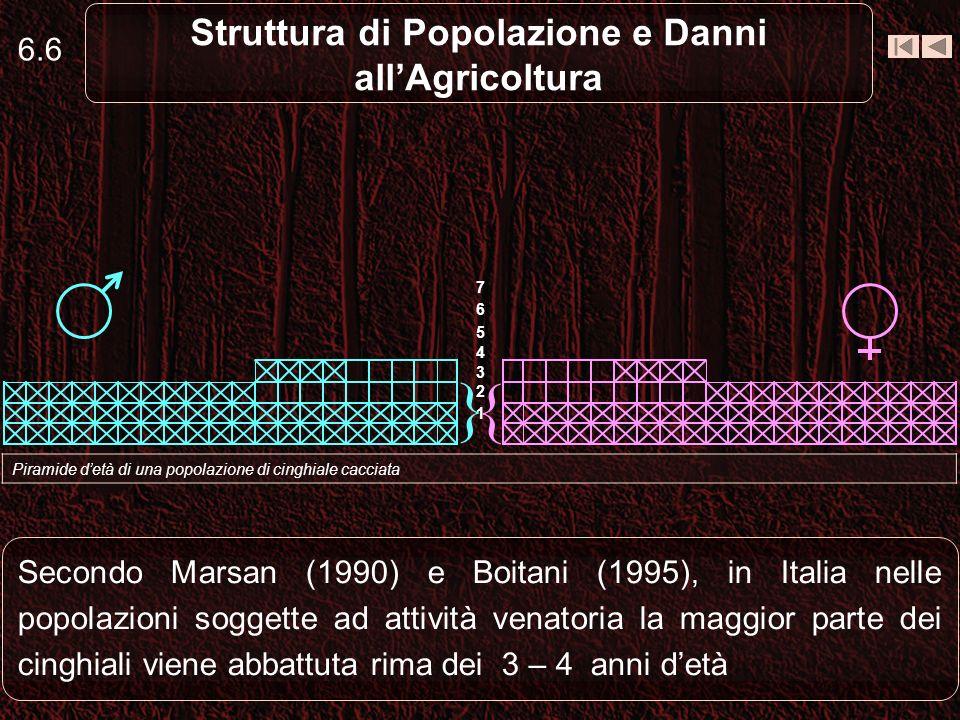 6.6 Struttura di Popolazione e Danni allAgricoltura Secondo Marsan (1990) e Boitani (1995), in Italia nelle popolazioni soggette ad attività venatoria