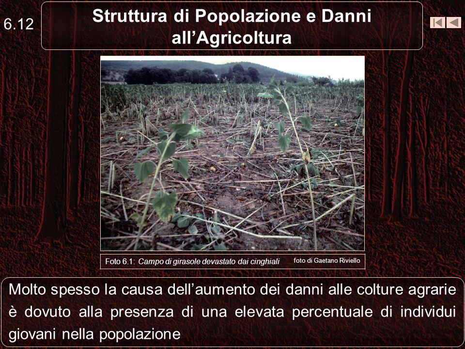 6.12 Struttura di Popolazione e Danni allAgricoltura Molto spesso la causa dellaumento dei danni alle colture agrarie è dovuto alla presenza di una el