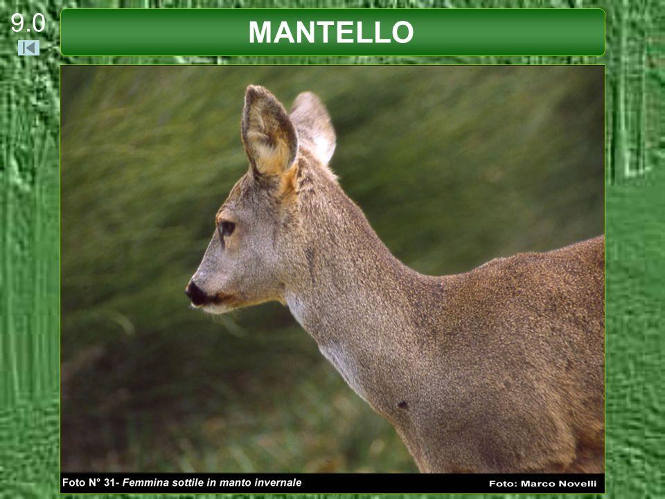 9.0 MANTELLO