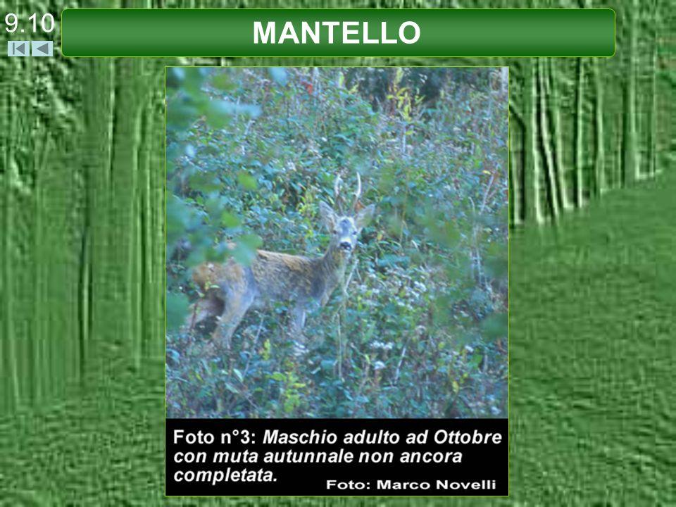 9.10 MANTELLO