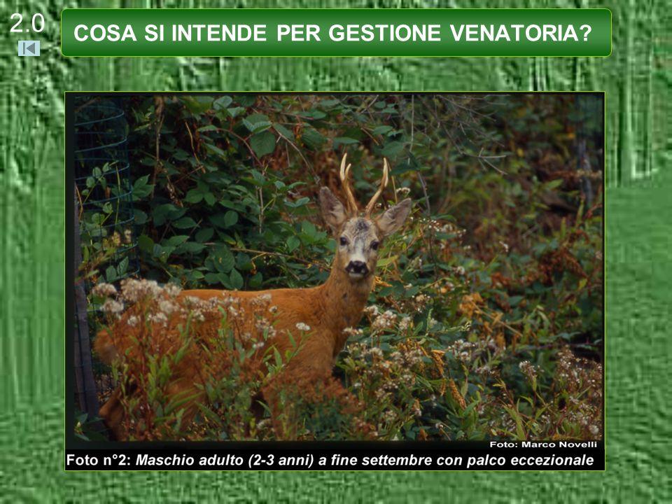 2.1 La selvaggina al pari delle altre risorse naturali (come il bosco e le acque) rappresenta un vero e proprio patrimonio naturale o uncapitale.