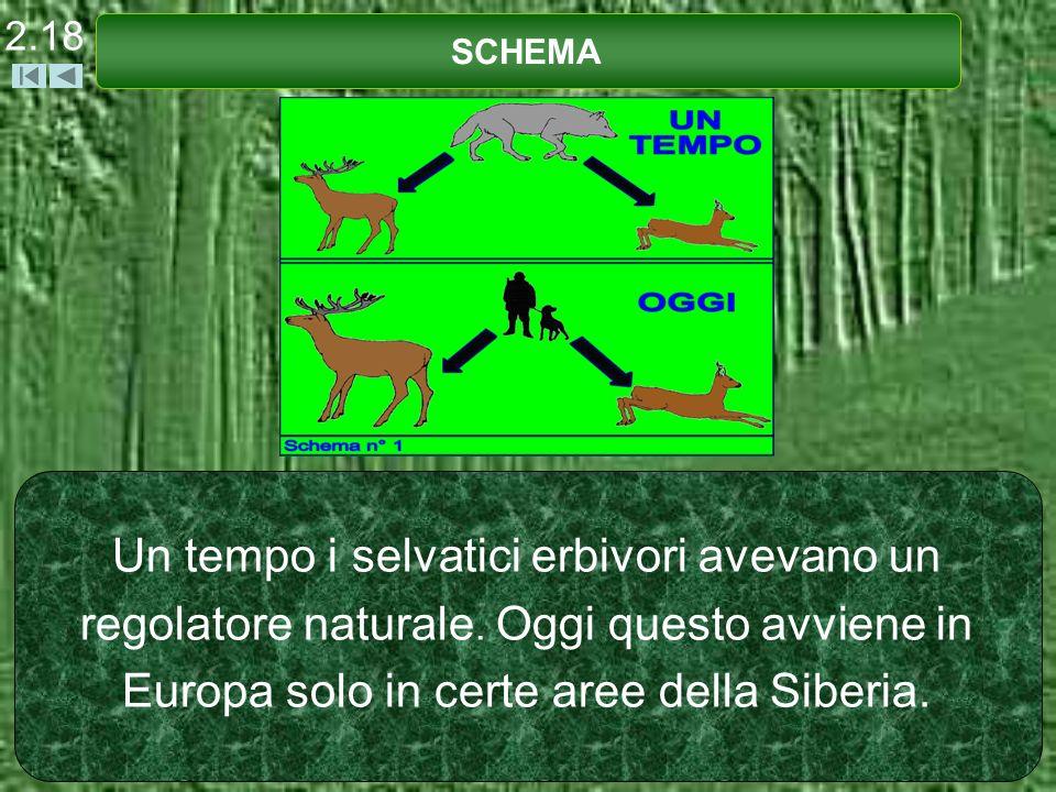 Un tempo i selvatici erbivori avevano un regolatore naturale. Oggi questo avviene in Europa solo in certe aree della Siberia. SCHEMA 2.18