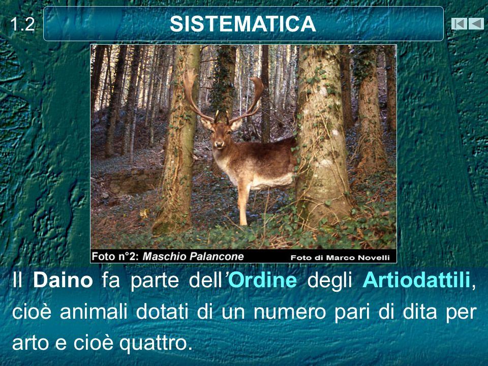 Il Daino fa parte dellOrdine degli Artiodattili, cioè animali dotati di un numero pari di dita per arto e cioè quattro. 1.2 SISTEMATICA