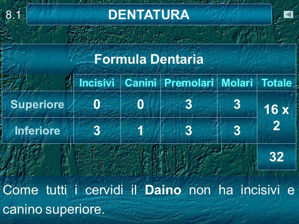 8.1 DENTATURA 32 3313 Inferiore 16 x 2 3300 Superiore TotaleMolariPremolariCaniniIncisivi Formula Dentaria Come tutti i cervidi il Daino non ha incisi
