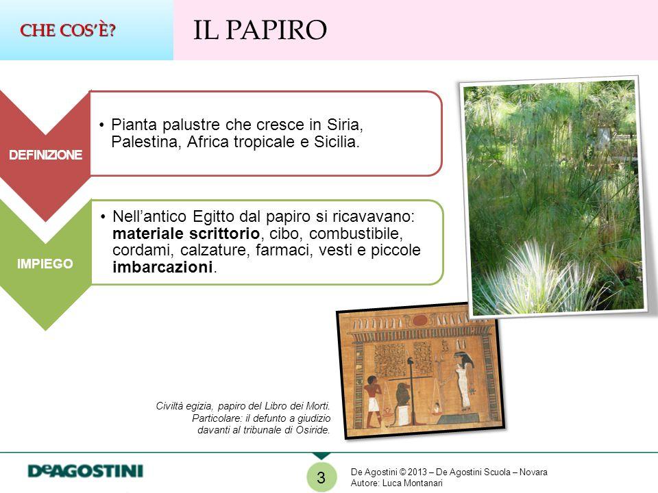 DEFINIZIONE Pianta palustre che cresce in Siria, Palestina, Africa tropicale e Sicilia. IMPIEGO Nellantico Egitto dal papiro si ricavavano: materiale