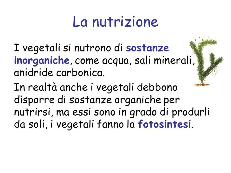 La nutrizione I vegetali si nutrono di sostanze inorganiche, come acqua, sali minerali, anidride carbonica. In realtà anche i vegetali debbono disporr