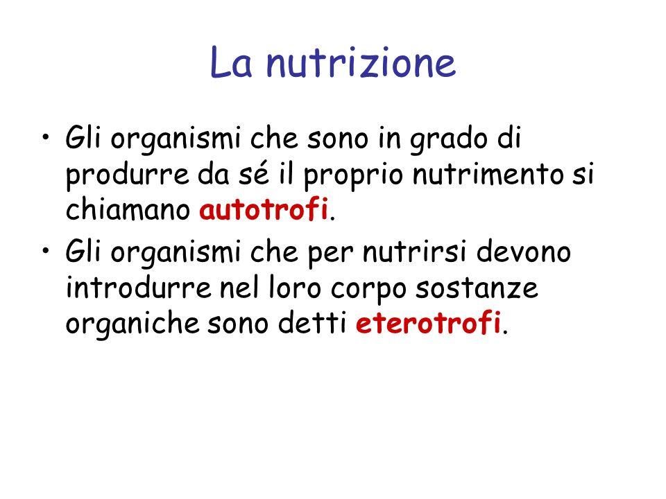 La nutrizione Gli organismi che sono in grado di produrre da sé il proprio nutrimento si chiamano autotrofi. Gli organismi che per nutrirsi devono int