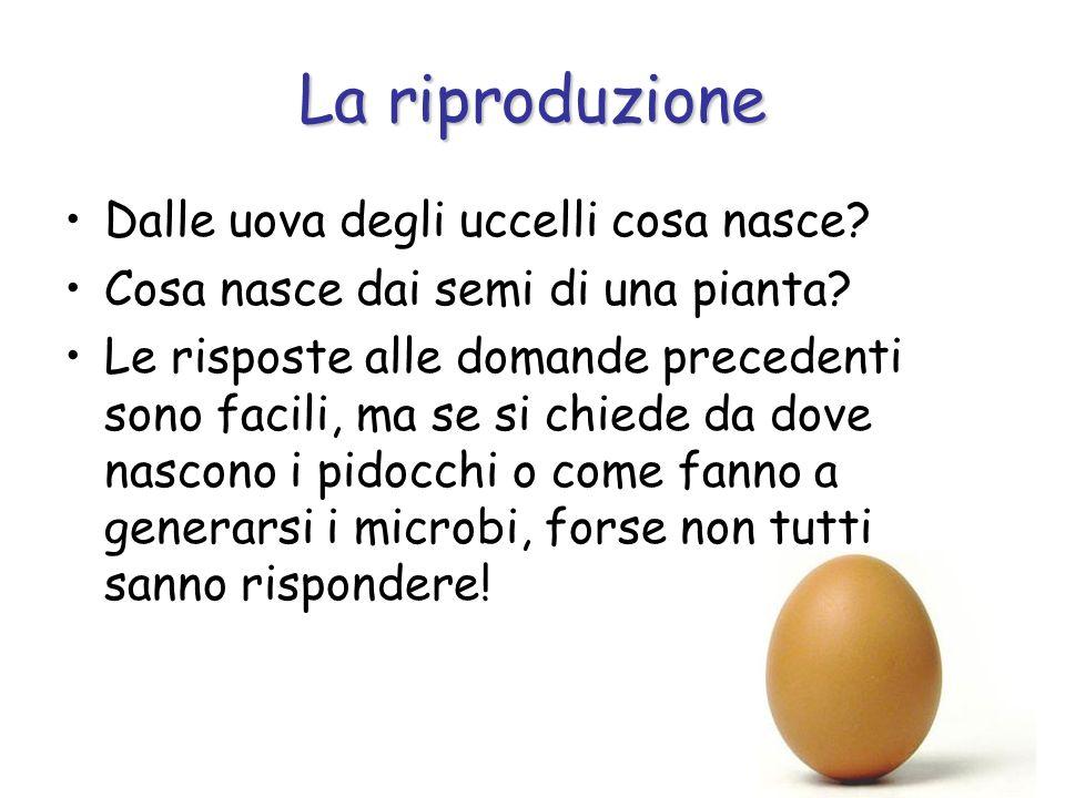 La riproduzione Dalle uova degli uccelli cosa nasce? Cosa nasce dai semi di una pianta? Le risposte alle domande precedenti sono facili, ma se si chie