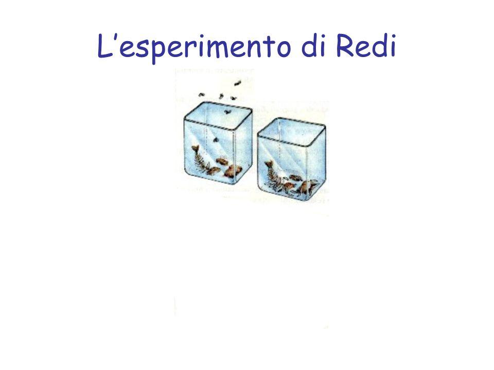 L'esperimento di Redi