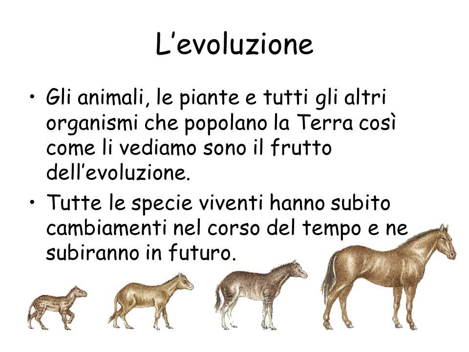 L'evoluzione Gli animali, le piante e tutti gli altri organismi che popolano la Terra così come li vediamo sono il frutto dell'evoluzione. Tutte le sp