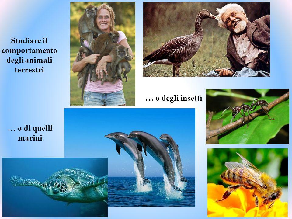 Studiare il comportamento degli animali terrestri … o di quelli marini … o degli insetti