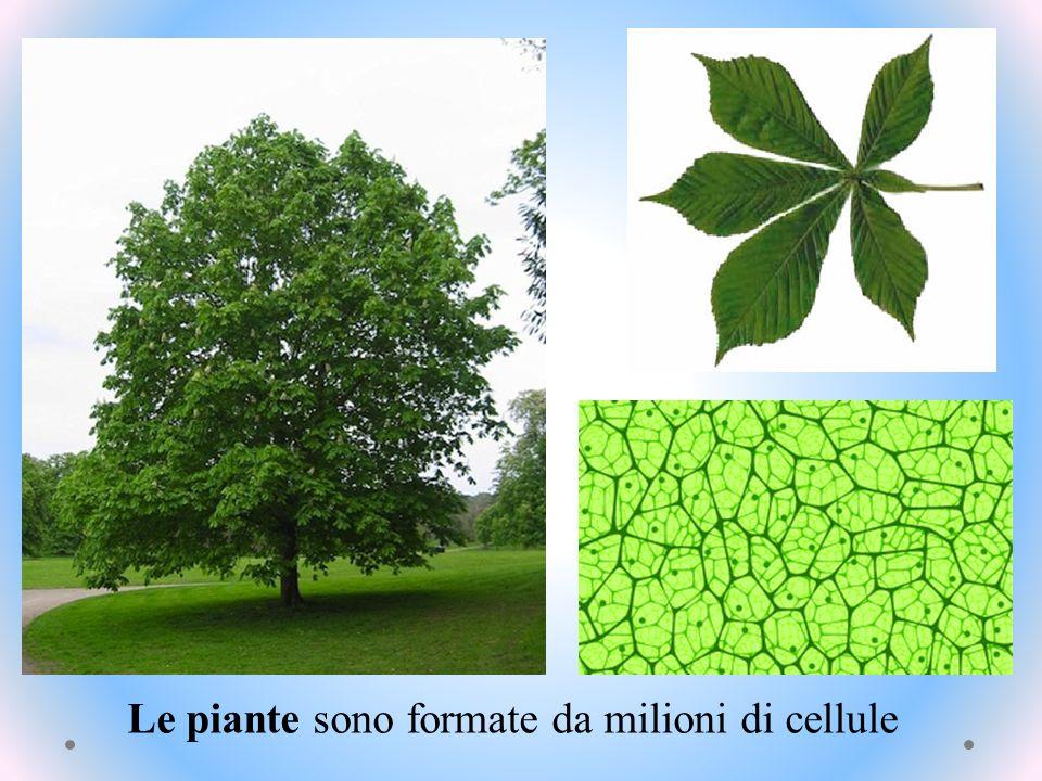 … o occuparsi di tenere pulito il pianeta Studiare le piante