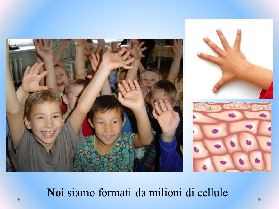 Noi siamo formati da milioni di cellule
