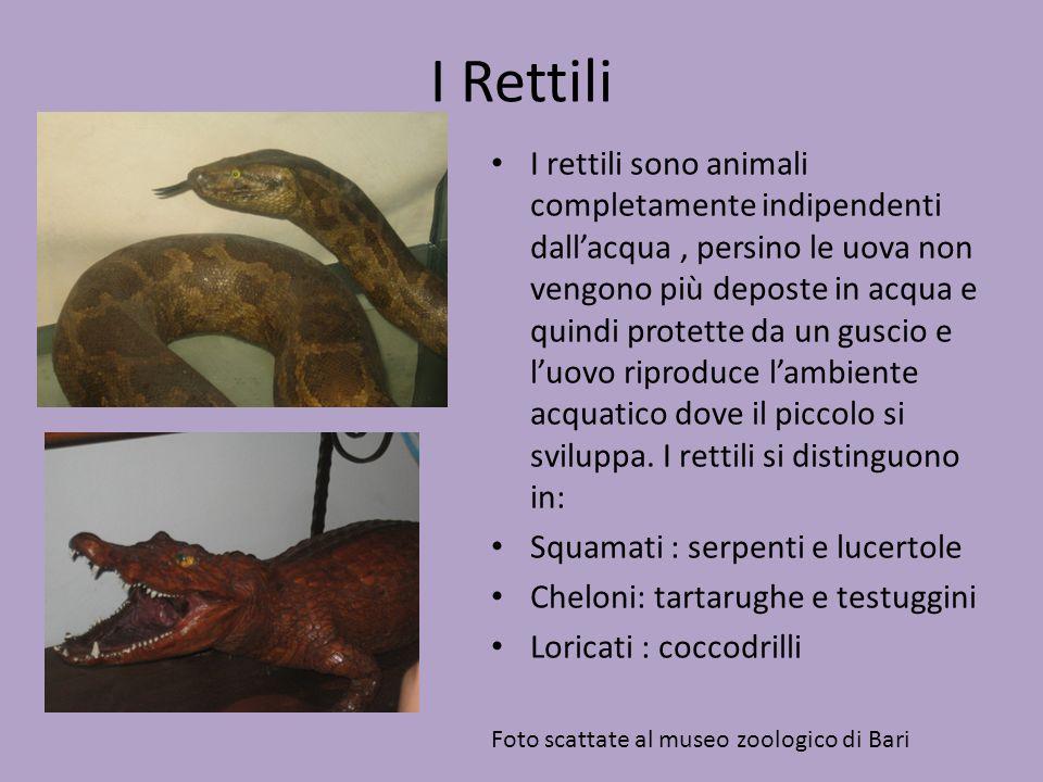 I Rettili I rettili sono animali completamente indipendenti dall'acqua, persino le uova non vengono più deposte in acqua e quindi protette da un gusci