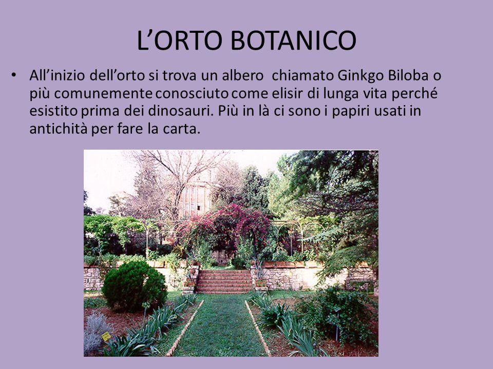 L'ORTO BOTANICO All'inizio dell'orto si trova un albero chiamato Ginkgo Biloba o più comunemente conosciuto come elisir di lunga vita perché esistito