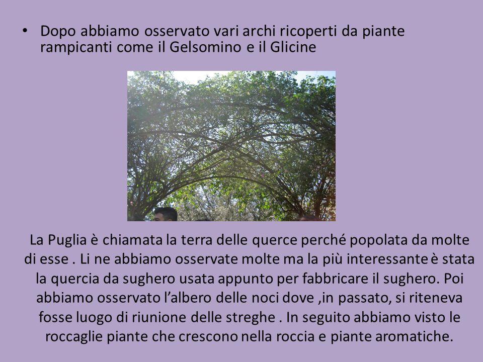 La Puglia è chiamata la terra delle querce perché popolata da molte di esse. Li ne abbiamo osservate molte ma la più interessante è stata la quercia d