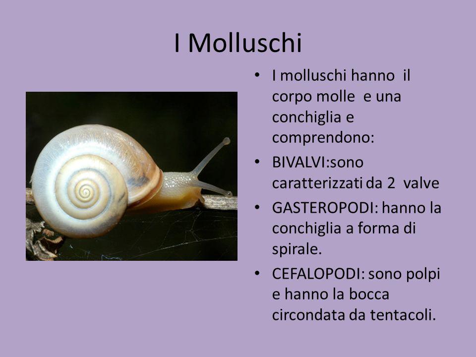 I Molluschi I molluschi hanno il corpo molle e una conchiglia e comprendono: BIVALVI:sono caratterizzati da 2 valve GASTEROPODI: hanno la conchiglia a