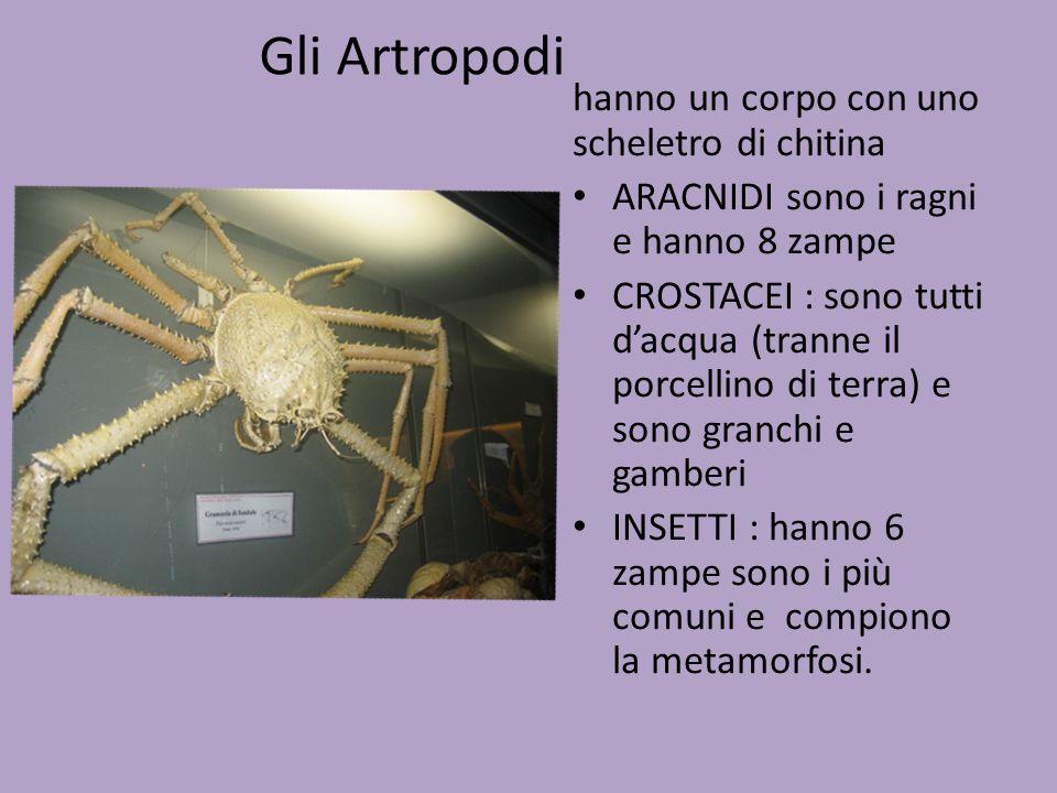 Gli Artropodi hanno un corpo con uno scheletro di chitina ARACNIDI sono i ragni e hanno 8 zampe CROSTACEI : sono tutti d'acqua (tranne il porcellino d