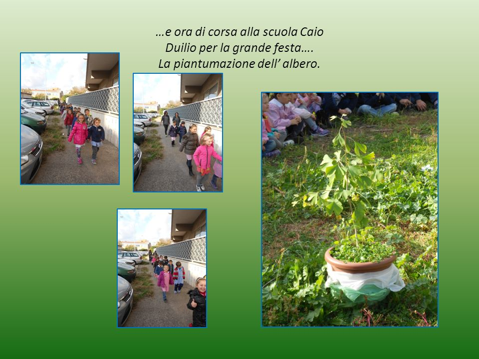 …e ora di corsa alla scuola Caio Duilio per la grande festa…. La piantumazione dell' albero.