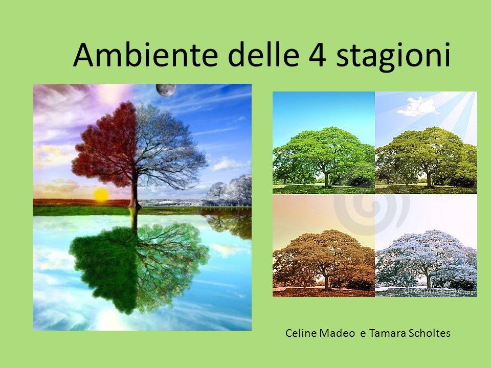 Ambiente delle 4 stagioni Celine Madeo e Tamara Scholtes