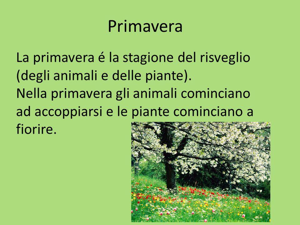 Primavera La primavera é la stagione del risveglio (degli animali e delle piante).