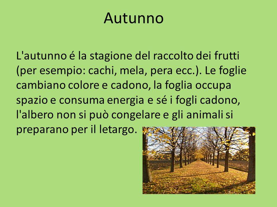 Autunno L autunno é la stagione del raccolto dei frutti (per esempio: cachi, mela, pera ecc.).