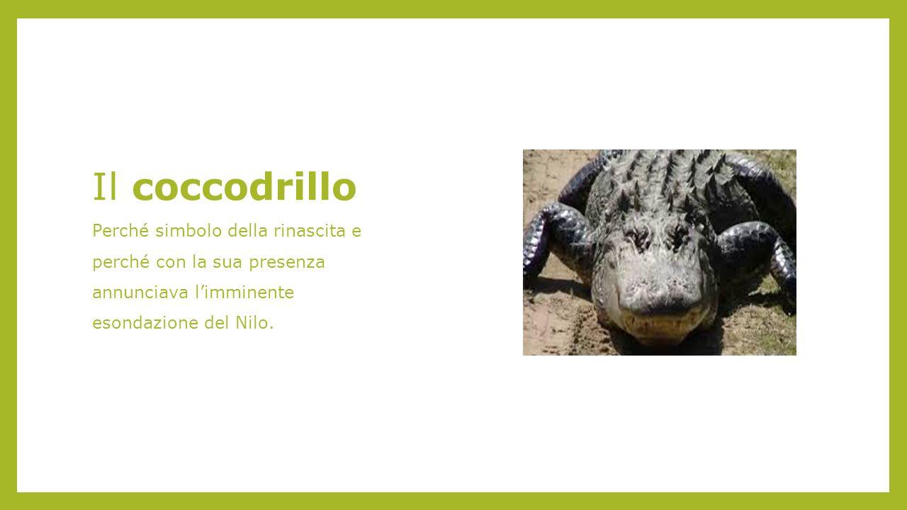 Il coccodrillo Perché simbolo della rinascita e perché con la sua presenza annunciava l'imminente esondazione del Nilo.