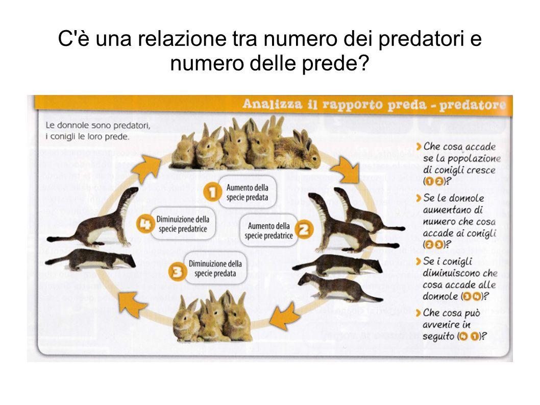 C è una relazione tra numero dei predatori e numero delle prede?