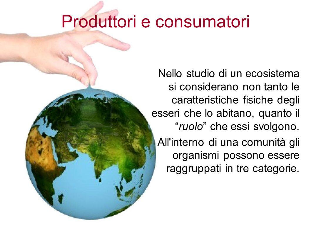 Produttori e consumatori Nello studio di un ecosistema si considerano non tanto le caratteristiche fisiche degli esseri che lo abitano, quanto il ruolo che essi svolgono.