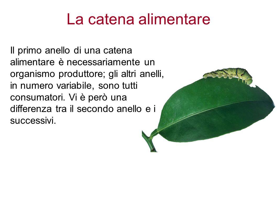 La catena alimentare Il primo anello di una catena alimentare è necessariamente un organismo produttore; gli altri anelli, in numero variabile, sono tutti consumatori.