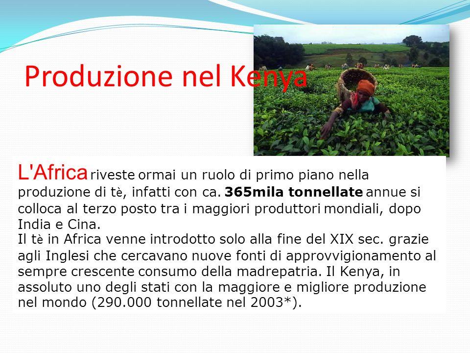 Produzione nel Kenya L'Africa riveste ormai un ruolo di primo piano nella produzione di t è, infatti con ca. 365mila tonnellate annue si colloca al te