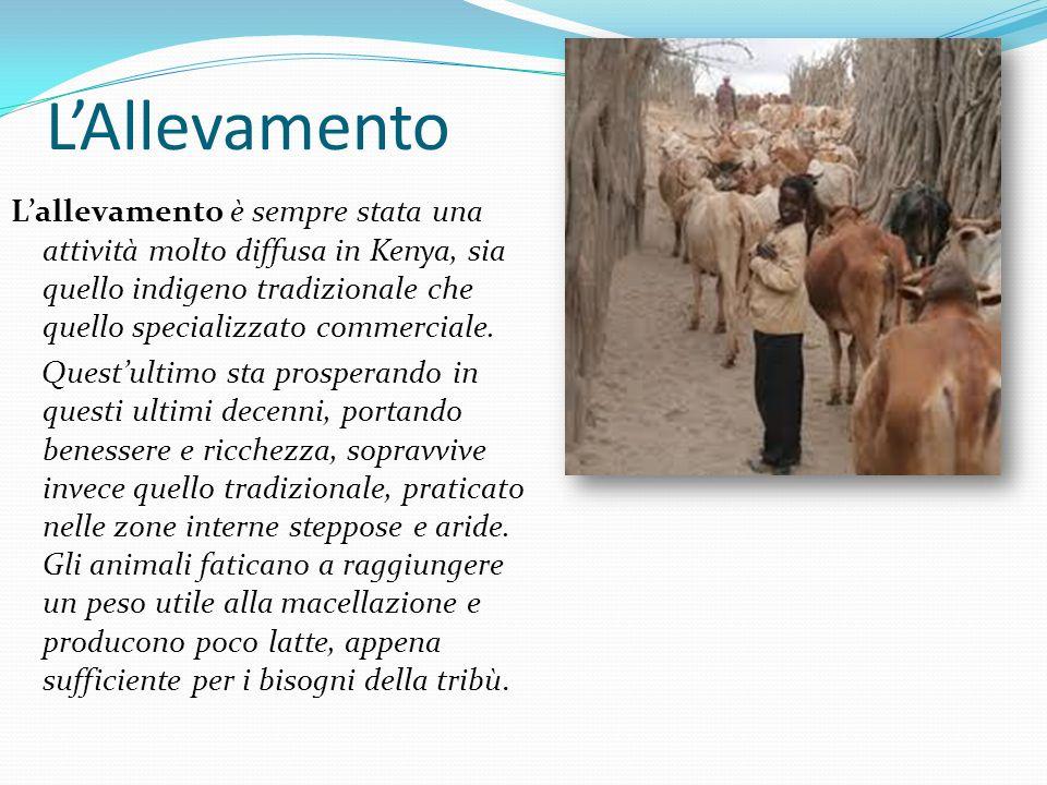L'Allevamento L'allevamento è sempre stata una attività molto diffusa in Kenya, sia quello indigeno tradizionale che quello specializzato commerciale.